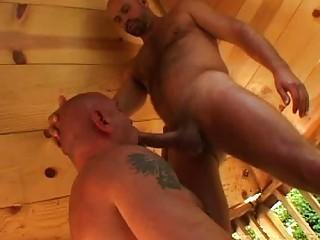 stiff gay bear gives fellatio to his grownup